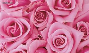 Rose (Pink)