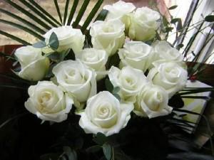 Rose (White)