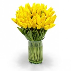 Tulip (Yellow)